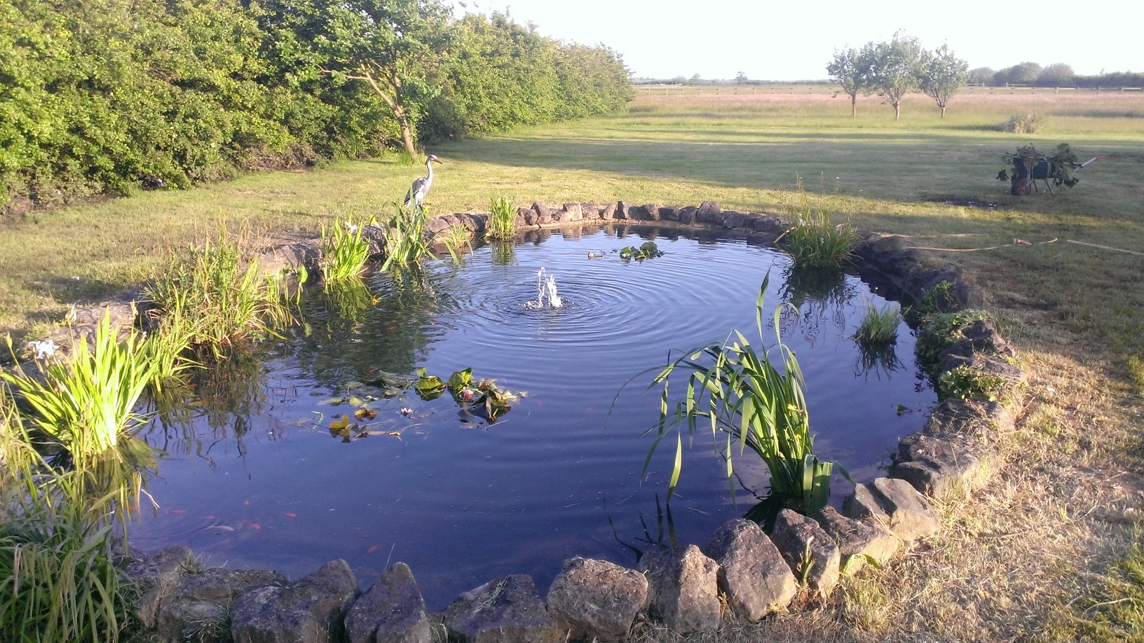 Pond cleaning specialists midlands pond services for Pond cleaning services